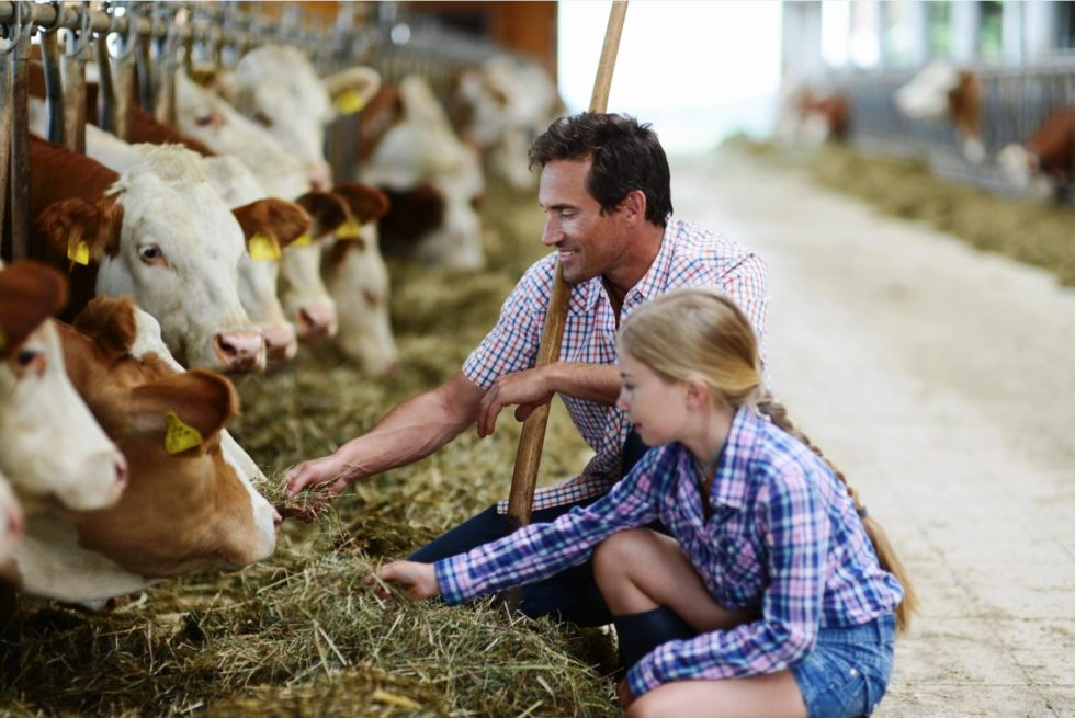 картинка семейная ферма статье собраны наиболее